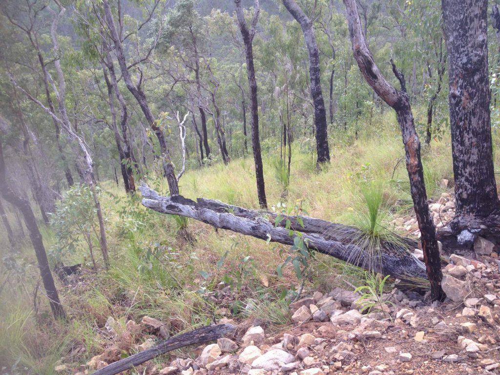 Atherton Bike Hire Atherton Tablelands Mountain Bikes and Bicycle Hire Confused Grass Palm