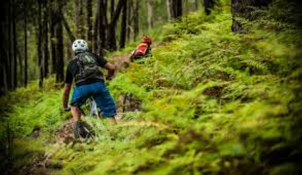 Atherton Bike Hire Atherton Tablelands Mountain Bikes and Bicycle Hire Fern forest